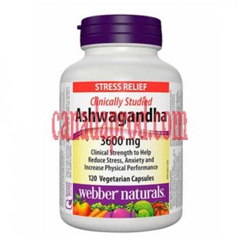 webber naturals Ashwagandha Vegetarian Capsules 120count